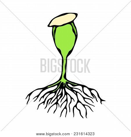 Vector Illustration Of Sprout With Seed And Roots. Seedling, Shoot, Sapling Gardening Plant. Trees,