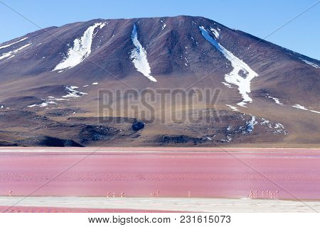 Laguna Colorada View, Bolivia