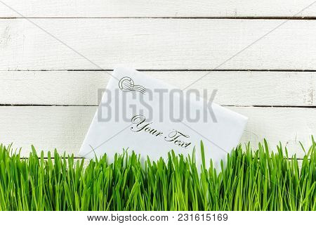 Green Grass On White Background, Old Tree. The Receipt Of The Letter In The Envelope. Place For Your