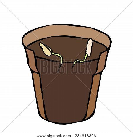 Flower Pot With Soil. Two Seed, Sprouts And Roots. Flowerpot For Sprouting Plant. Shooting Sprout Ba