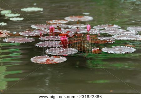Spring Water Lily Travel, Amazing Warmth, Puddle, Nautical, Travel, Amazing, View