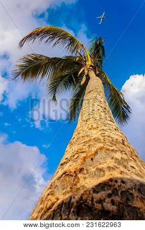Snapshot From The Bottom Upwards To A Tall, Tropical, Coconut Palm With Fruit, The Sky With Clouds A