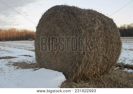 A Role Of Hay In Farm Field With Snow