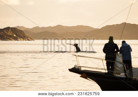 People Watching Whales From A Yacht At Sunset, Western Greenland. Shallow Depth Of Field