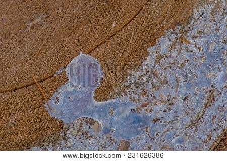 Extreme Closeup Of Edge Of Tree Trunk Covered With Layer Of White Resin On Outer Edge