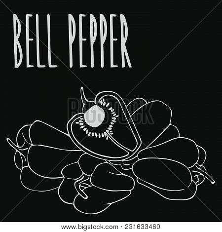 Isolate Capsicum Or Bell Pepper As Chalk On Blackboard. Close Up Clipart In Chalkboard Style. Hand D