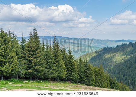 Romanian Mountain Forest In Transylvania, Near Sibiu.