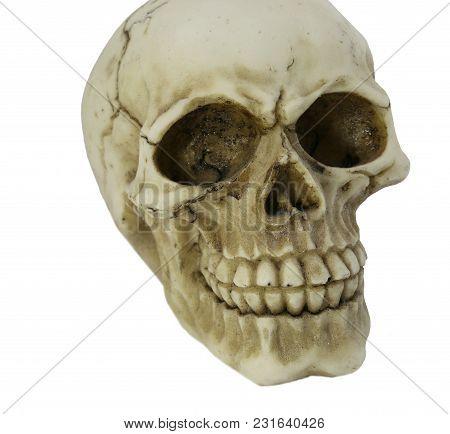 Model Of Human Skull Grinding   On White Background