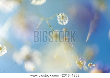 The Beautiful Flower Background. Amazing View Of Bright White Flowers Blooming In The Garden At The