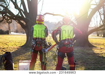 Two Arborist Men Standing Against Two Big Trees. The Worker With Helmet Working At Height On The Tre