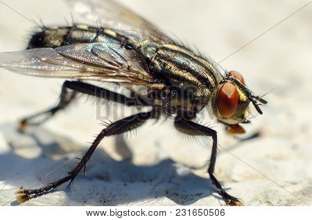 A Fly Sitting On A Stone Macro