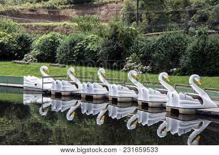 White Swan Pedal Boat Activity Outdoors Lake Leisure