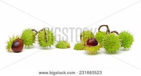 Mature Chestnuts Isolated On White Background. Horizontal Photo.