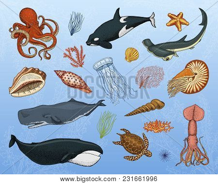 Fishes Set Or Sea Creature Blue Whales., Jellyfish And Starfish. Octopus And Squid, Calamari, Hammer