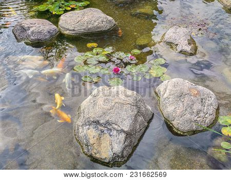 Decorative Fish Swim In Pond With Stones.view From Above