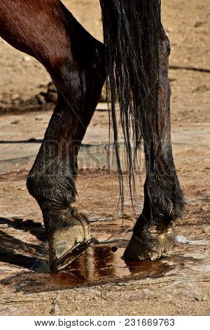 A Horse Stands In A Corral With A Relaxed Left Rear Leg.