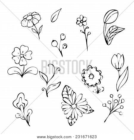 Collection Of Hand-drawn Flowers And Plants. Monochrome Vector Illustration In A Sketch Style. Stock