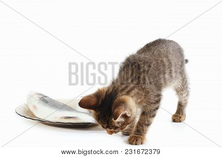 Pretty Kitten Looks At Fish In A Plate On A White Background