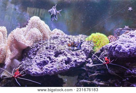 Reef Tank, Marine Aquarium Full Of Fishes And Plants. Tank Filled With Water For Keeping Live Underw