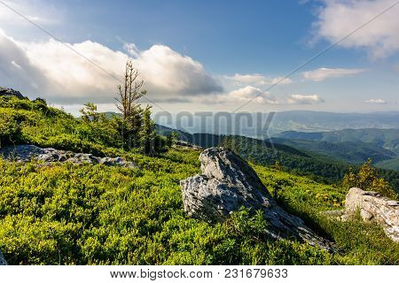 Small Spruce Tree At The Top Of A Hill. Beautiful Landscape With Boulders On Grassy Hillside On A Cl