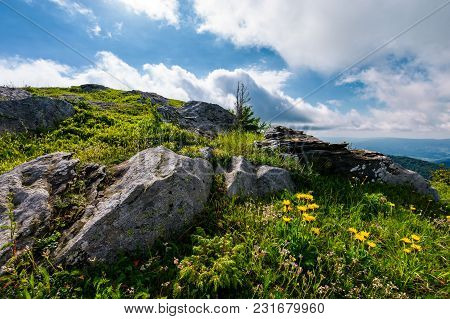Yellow Dandelions In Mountains. Little Flowers Grow In Severe Environment. Tough Life Concept. Beaut