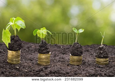 Golden Coins In Soil With Young Plant Isolated. Money Growth.