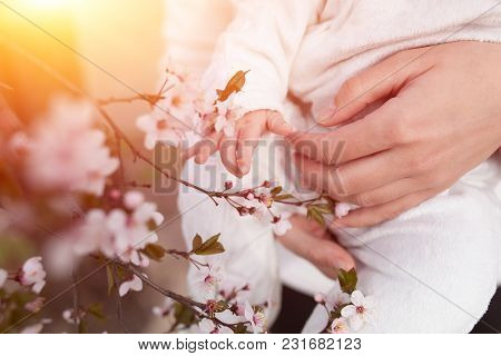 Baby Touching Flowers. Children's Hands Closeup