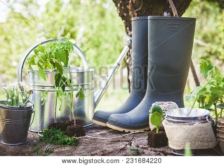 Spring Garden. Seedlings In Soil. Garden Tools And Equipment