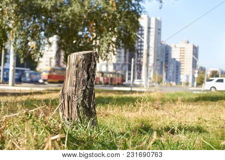 Tree Felling. City Background. Green Grass. City Landscape.
