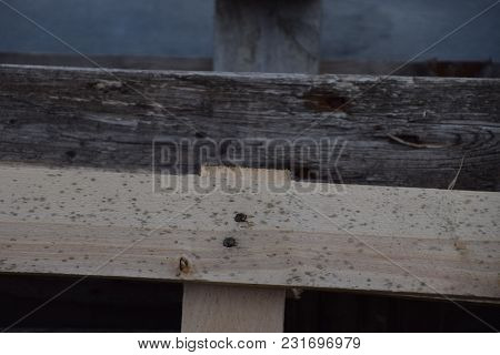 Old Wooden Pallet And New Wooden Pallet With Mold And Foxing