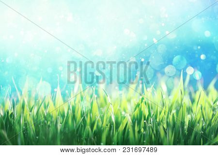 Dew covered green grass against blue sky background
