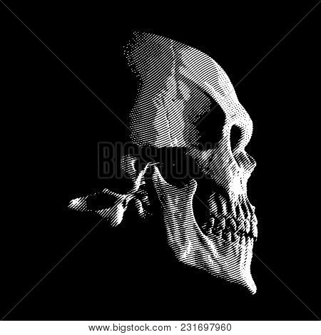 Human Skull In Profile, Engraved On Black Background, Vector Illustration