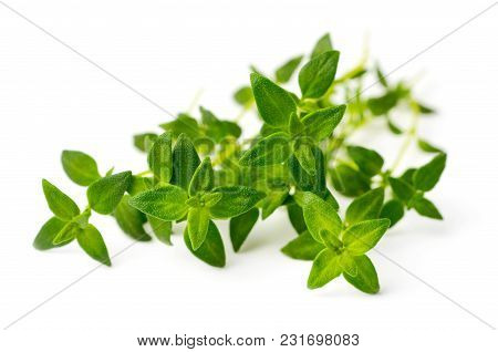 Fresh Herb, Fresh Thyme Isolated On White Background
