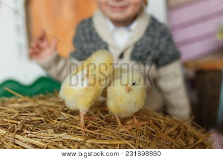 Little Chicks On The Hay In Traditional Ukrainian Interior. On Blurred Baby Silhouette.