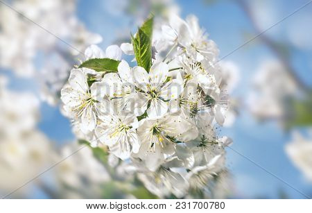 Springtime Background. Soft Focus Image Of Spring Flowers Blossom With Sun Light. Beautiful Nature S