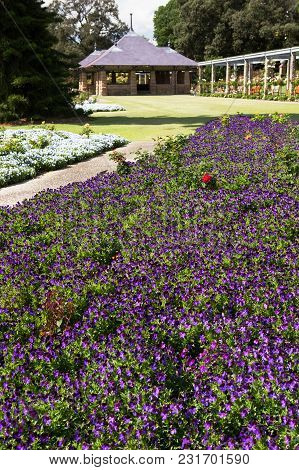 The Royal Botanic Gardens, Sydney,new South Wales