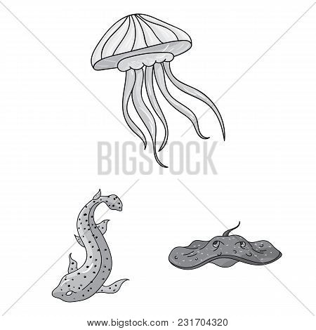 A Variety Of Marine Animals Monochrome Icons In Set Collection For Design. Fish And Shellfish Vector