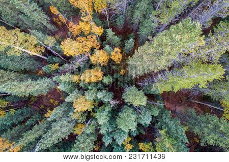 spruce and aspen in fall colors at Kenosha Pass in Colorado's Rocky Mountains, aerial view with wide angle perspective