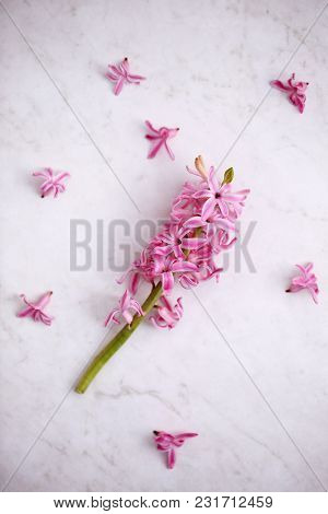 Flowers Of A Pink Hyacinth On A White Table
