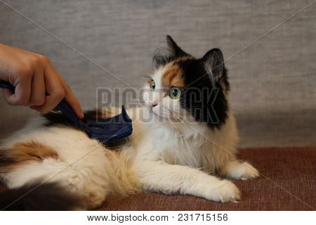 Comb Hair Multicolored Cat. Brush For Animals