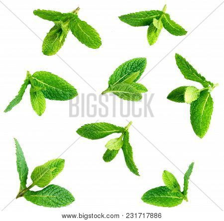 Fresh Mint Leaves Pattern Isolated On White Background, Top View. Set Of Peppermint, Close Up