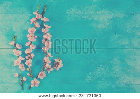 Fresh Pink Cherry Blossom Twigs With Flowers On Blue Wooden Background With Copy Space, Retro Toned