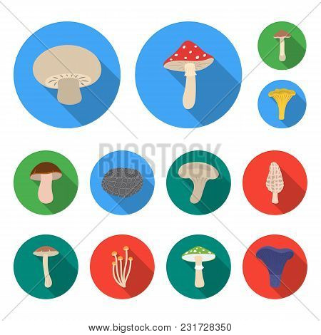 Poisonous And Edible Mushroom Flat Icons In Set Collection For Design. Different Types Of Mushrooms