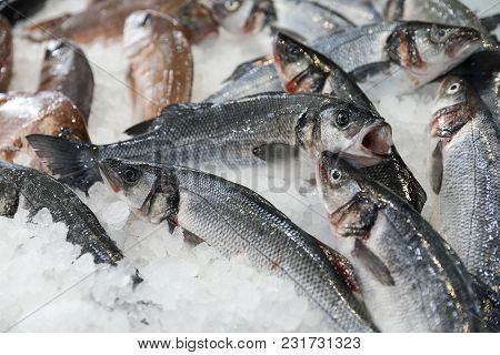 Fresh European Seabass Or Dicentrarchus Labrax, Lav On Ice In The Greek Fish Shop For Sale. Horizont