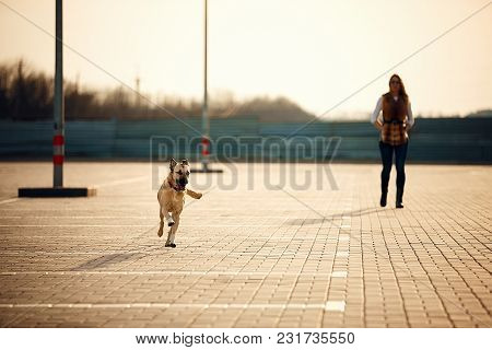 Girl With Her Dog Resting Outdoors. Autumn