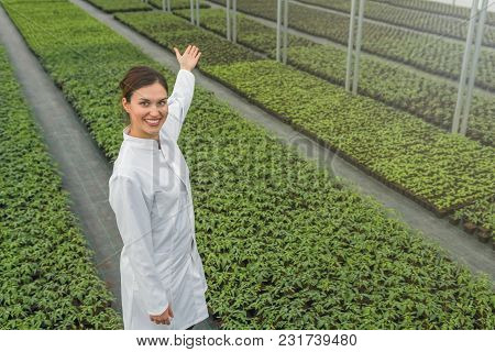 Seedlings Production, Spring Seedlings. Successful Young Nursery Owner. Greenhouse Seedlings Nursery