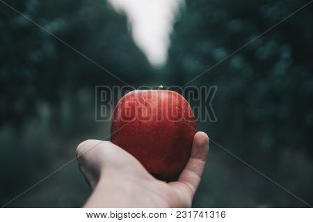 Delicious Red Apple In A Hand