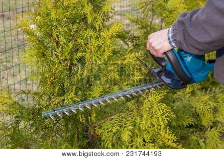 Hedge Trimming, Works In A Garden. Gardener With A Professional Garden Tools At Work.