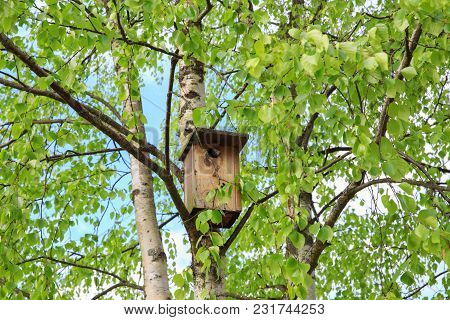 Young Starling Peeking Out Of The Birdhouse