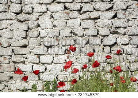Deteriorating Brick Wall Painted Fragile Poppy Flowers